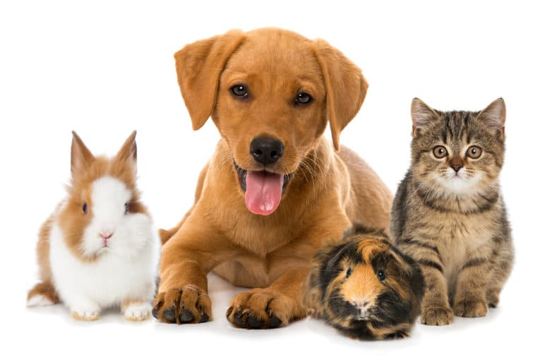 Providing for Your Pet with a Trust